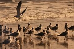 sea-gulls-scaled